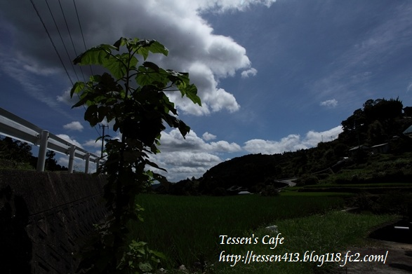 IMG_42011.jpg