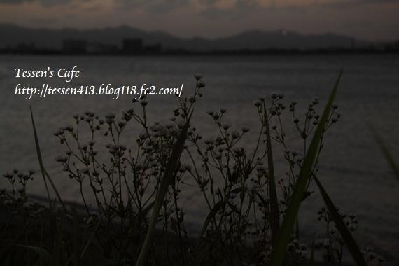 IMG_8309.jpg