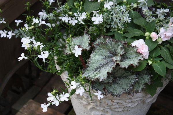 T's Garden Healing Flowers‐八重インパの寄せ植え
