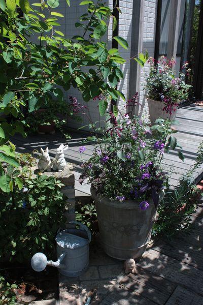T's Garden Healing Flowers‐オレガノ・ブルガリ
