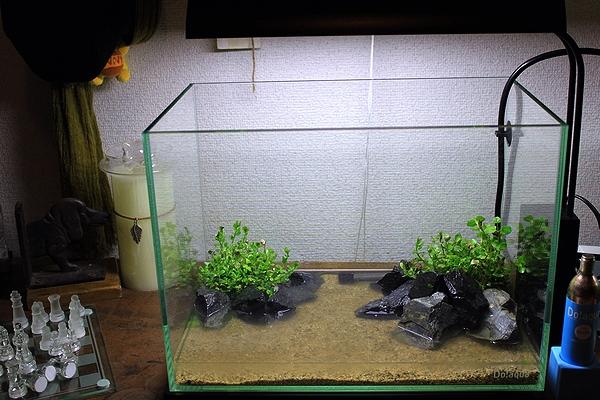 初めての水草レイアウトセット1