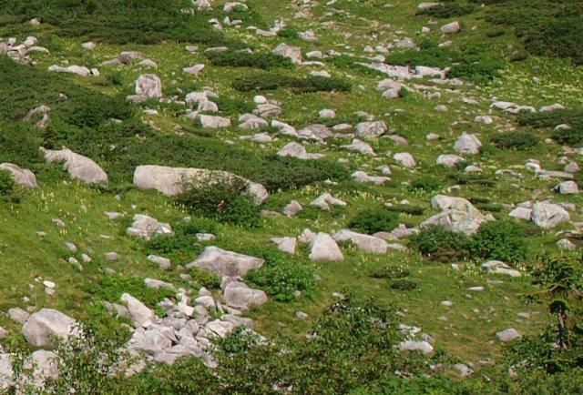 s2羊群岩