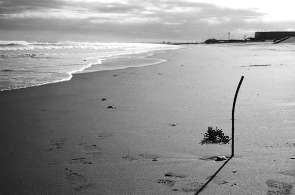 Leica M3 Sonnar ILFORD PANF PLUS50