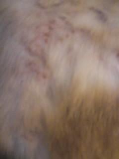 ガーナ皮膚2