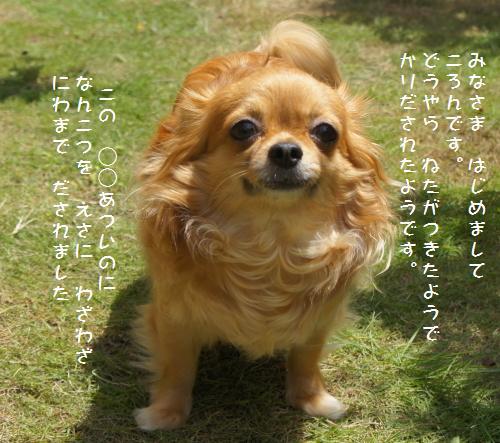 DSC02483_20120709114516.jpg