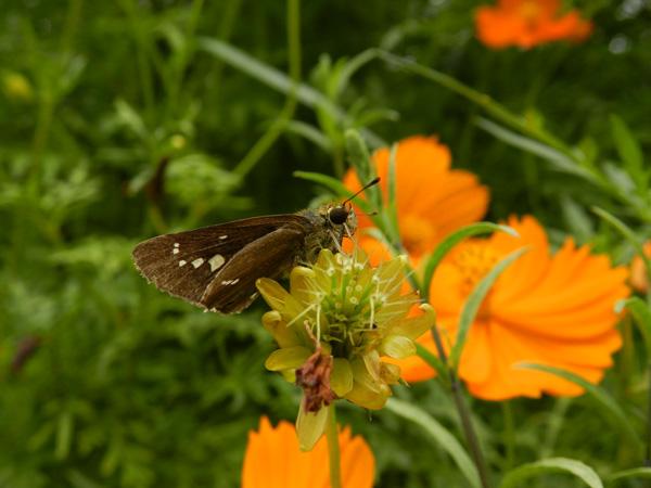 2012-09-08_P500_2760.jpg