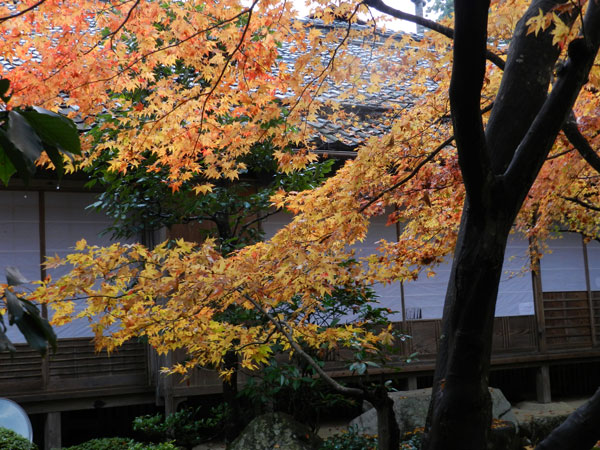 2012-11-23_P500_1657.jpg