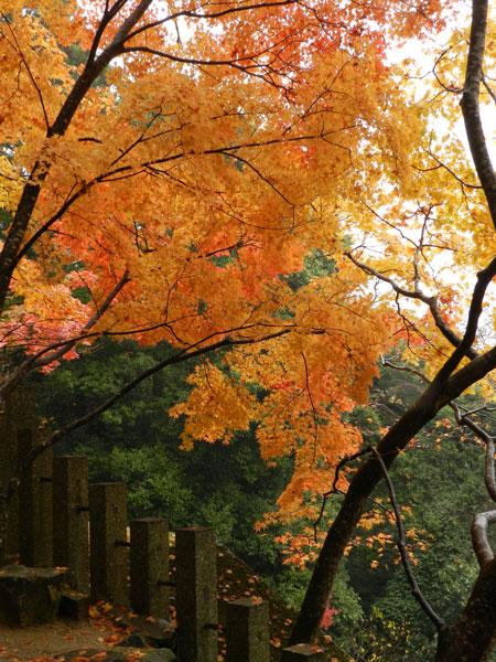 2012-11-23_P500_1794.jpg
