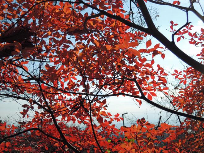 2012-12-09_景色_2210