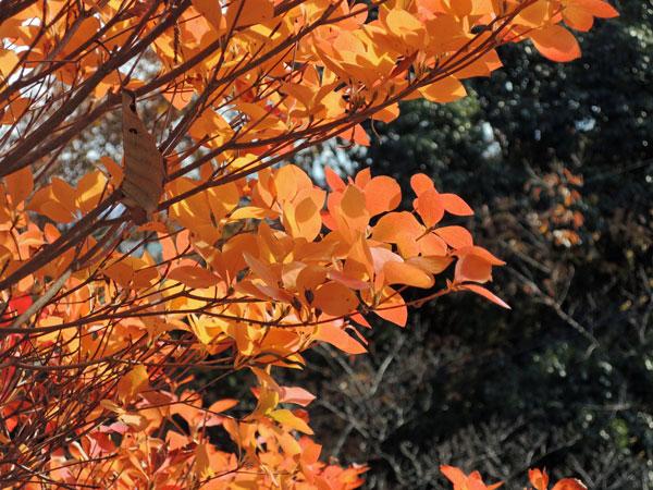 2012-12-09_景色_2204
