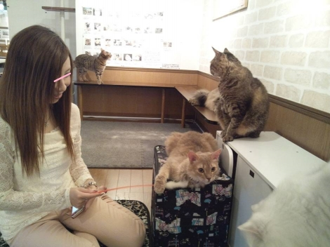 猫カフェ にゃんこで癒されてるクラブ嬢の杏ちゃんを写メショットした