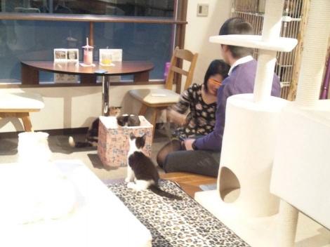 猫カフェにゃんこに来たもう1カップルが猫たちと触れ合う様子を写メしましたが話せば男性はハウスメーカー勤務でした