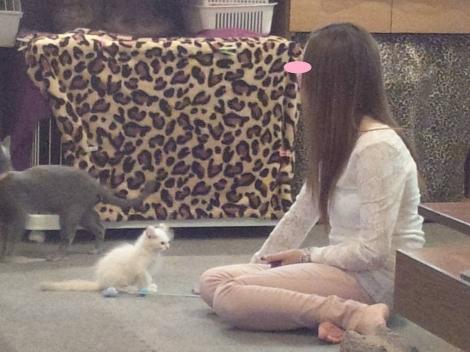 猫カフェにゃんこで、子猫になつかれ癒されてる瞬間のクラブ嬢を写メしました