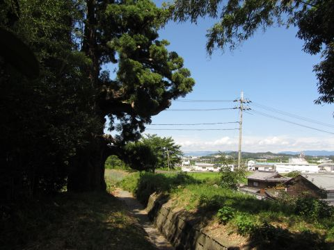 大沙川と弘法杉