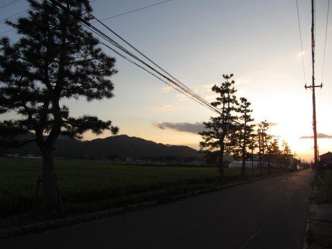 北脇縄手と松並木