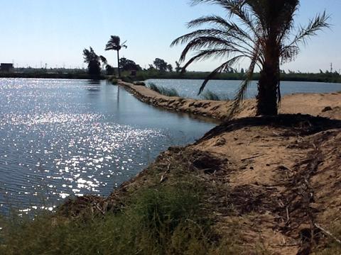 buheira 2012-1