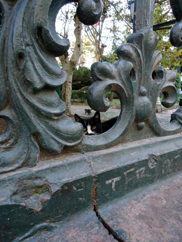 istanbul cat-3