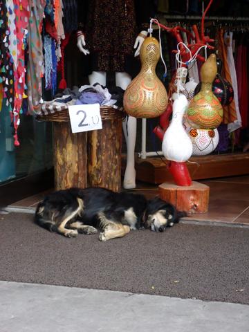 istanbul dog-1