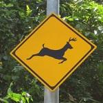 飛び出し注意の標識