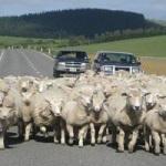 道路に飛び出してくる動物
