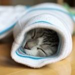 イモムシ猫