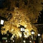 栃木県の神社