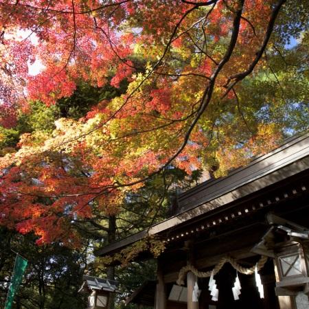 太平山神社の紅葉