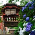 太平山神社のあじさい