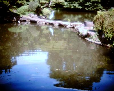 池に映るダイサギ:Entry