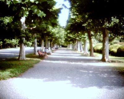 憩いのプラタナス並木:Entry