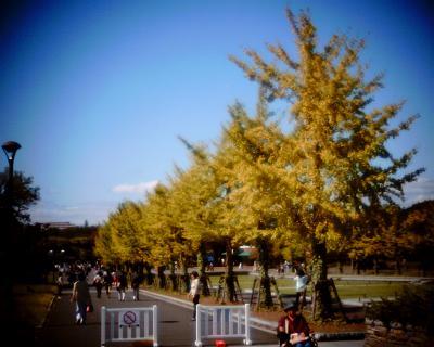 イチョウの木と月見:昭和記念公園:Entry