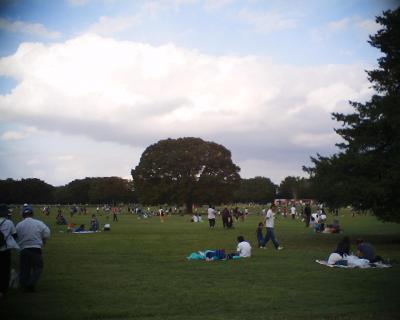大きなケヤキの木:昭和記念公園:R2