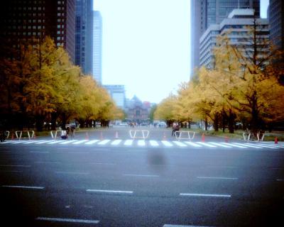 東京駅前イチョウ並木:Entry