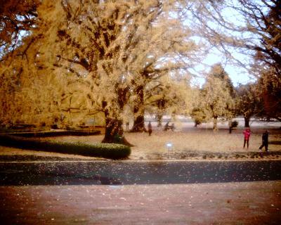 大きなイチョウの木の下で:新宿御苑:Entry