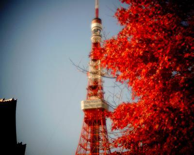 紅葉と東京タワーと増上寺:Entry