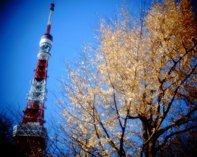 イチョウと東京タワー:Entry