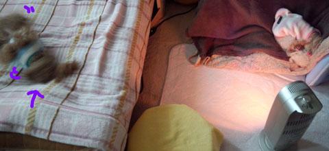 ベッドメイクのお邪魔虫