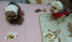 コロお昼ご飯2
