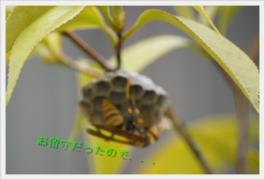 DSC00269a.jpg