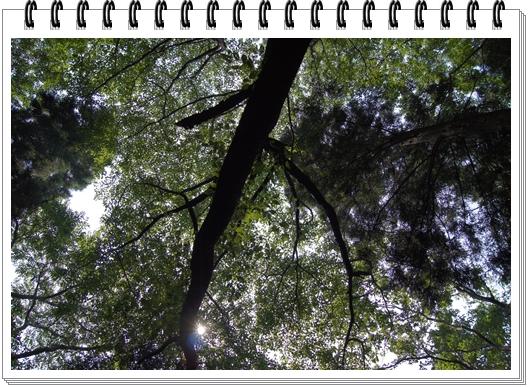 DSC01552b.jpg