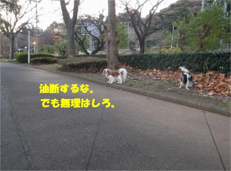 01_convert_20141215175549.jpg