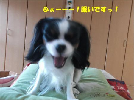 02_convert_20141219183159.jpg