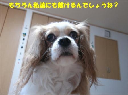03_convert_20141209181554.jpg