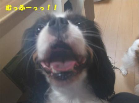 03_convert_20141210173250.jpg