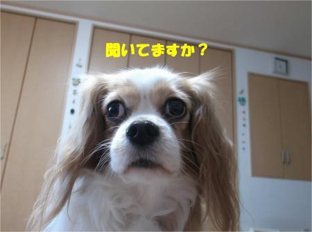 04_convert_20141209181613.jpg