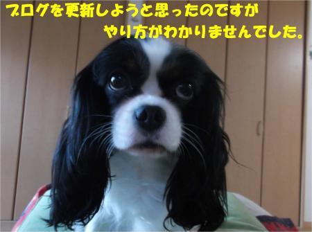 05_convert_20141219183231.jpg