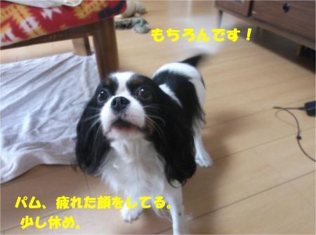 06_convert_20141128180522.jpg
