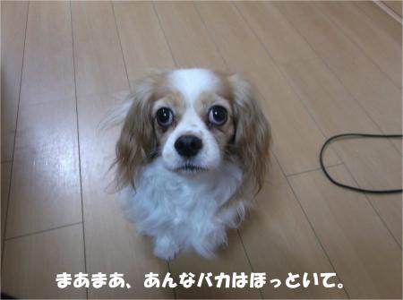 06_convert_20141216180633.jpg