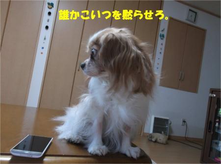 07_convert_20141211180157.jpg