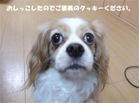 07_convert_20141216180642.jpg